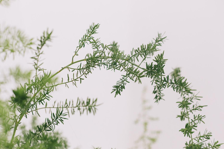 Green foliage for a minimalist floral installation